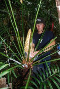 Native Guam Plant